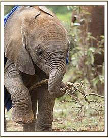 Little Kimana playing with a branch