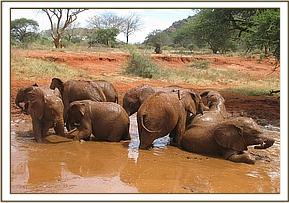 Orphans and new arrivals enjoy a mudbath