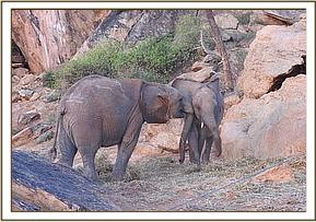 Bomani playing with Lemoyian