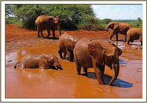 Layoni, Kenia and the others bathing