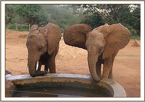 Layoni and Kivuko checking if any water left