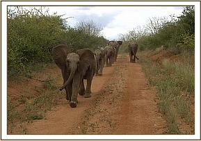 Tomboi leads the way