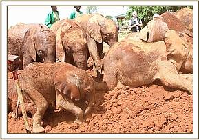 Ajabu joins the other ellies playing