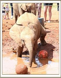 Kithaka chases 2 footballs into the mud