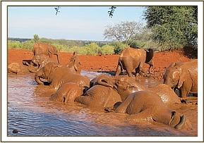 Orphans having a lovely mudbath