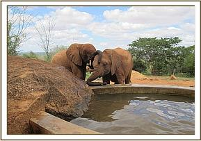 Shimba left and Tassia near the water trough
