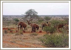 A wild group having a drink at the mudwallow