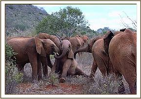 Burra and Serah push Thoma to get up