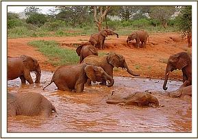 The orphans have a nice mudbath
