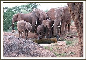 Wild group enjoys a drink at the water trough