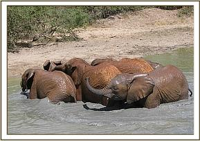 Orphans wallowing