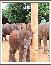 Ajabu scratches up against a pole