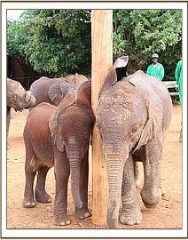 Ajabu and Narok share a scratch on the pole