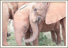 Arruba and Orwa