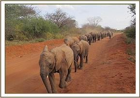 Mutara leading the way