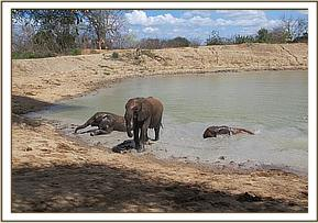 Ololoo, Kalama and Kasigau wallowing