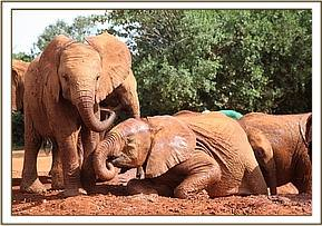 Turkwel playing with Ishanga next to her