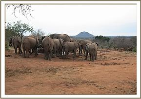 Ex orphans with wild eles at the stockade