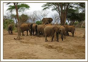 Orphans and a wild elephant