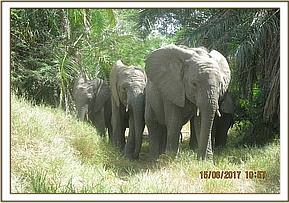 Murera leading babies out to the bottle feeding