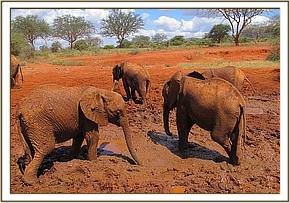 Kivuko and others playing in the mud