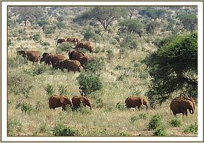Orphans with a herd of wild eles