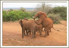 Laikipia mounting Sweet Sally