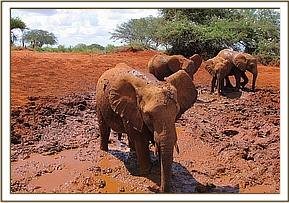 Taveta, Kenia and Others enjoy the mudbath