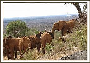 The orphans with wild elephants