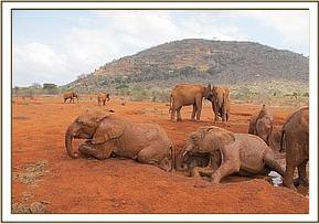 Kenia in the front with Wesesa bathing