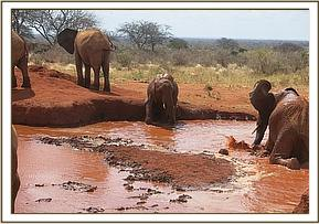 Layoni trying to play with Sinya in the mud
