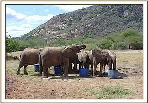 The orphans quenching their thirst