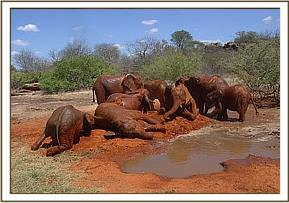 The orphans soil and water bathing