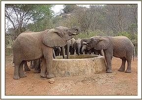 The orphans have an evening drink of water
