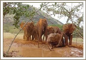 The orphans enjoying the mudwallow