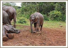Ngilai playing with a tree stump