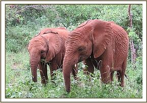 Lemoyian and Barsilinga seem close friends
