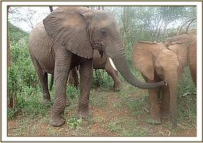 Chyulu loves little baby Lemoyian