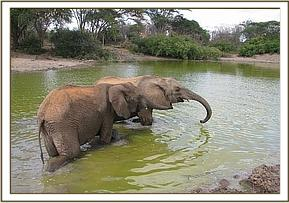 Makena & Lenana in the water