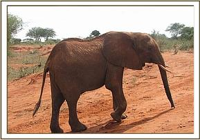 Mweiga leaving the water hole