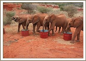 The orphans drinking water