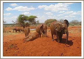 The orphans playing in the soil