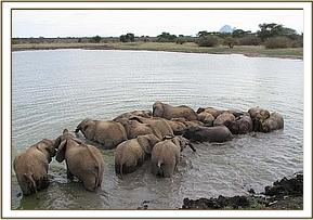 the orphans enjoying the wallow at Ithumba
