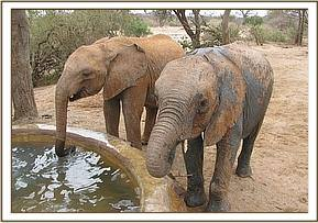 Kilaguni and Ithumbah having a drink