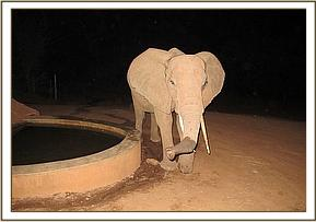 Ndara enjoying the stockades fresh water at night