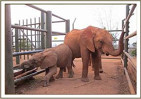 Kenia looking after the younger ones