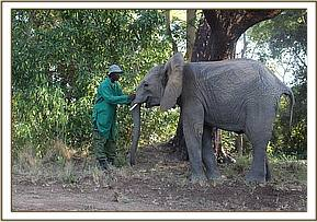 Murera speaking with her keeper