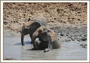 lemoyian & shukuru mud bathing