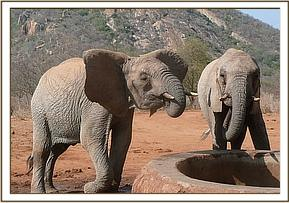 Challa and Napasha having a drink of water