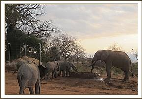 Orphans and wild ele drinking water